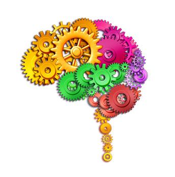Neuroedukacja. Warto wiedzieć.