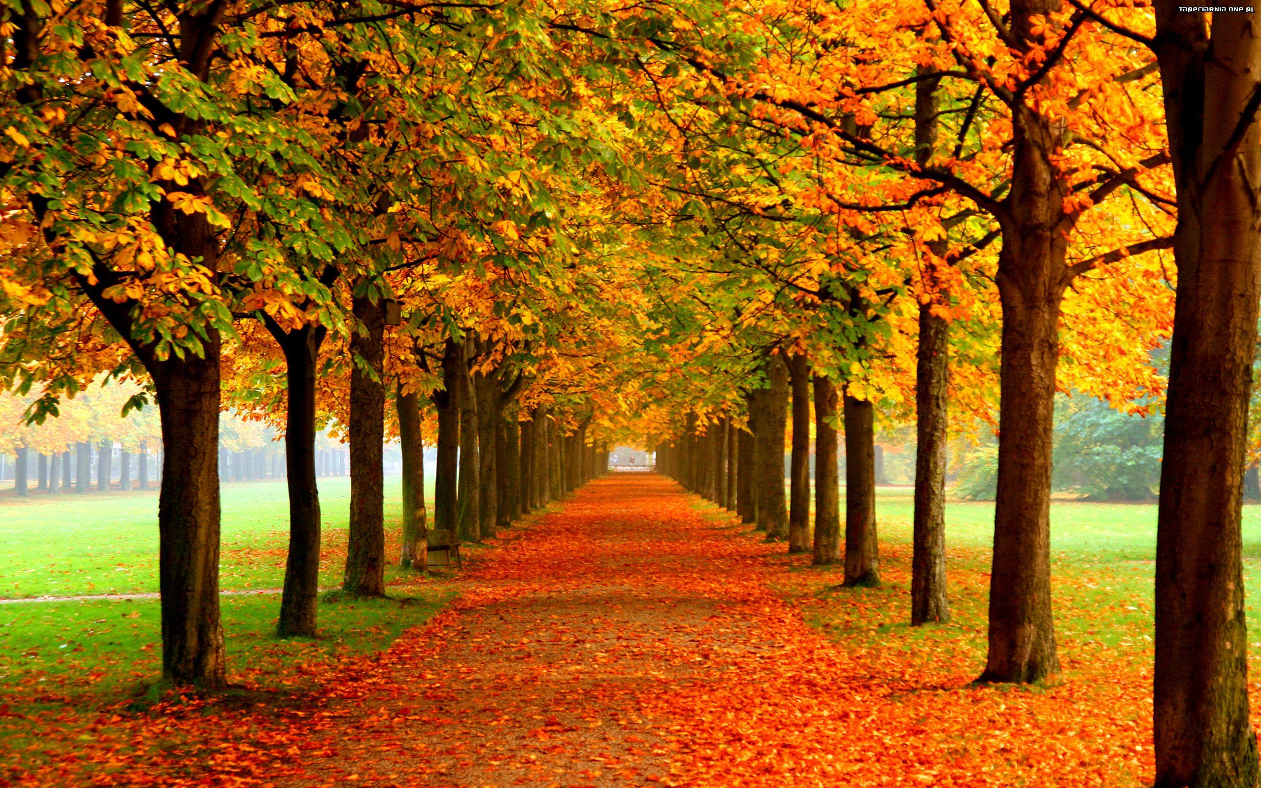 Jesień u świetliczaków w Dwójce