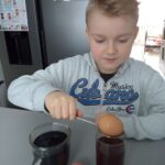 Uczeń wkłada jajka do herbaty i soku z buraka