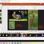 Strona z prezentacji ze zdjęciami zająca i królika