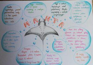 Zdjęcie przedstawia ikonografikę dotyczącą manty i istotne informacje o tym gatunku.