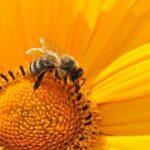 Chrońmy pszczoły!!