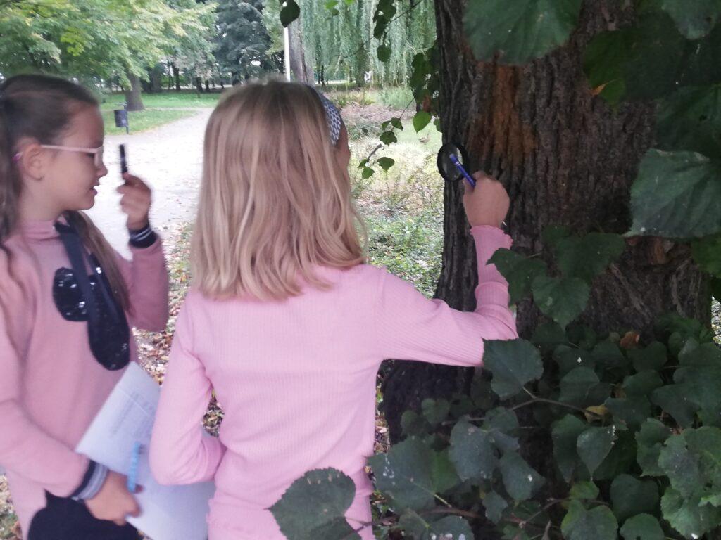 Uczennice obserwują korę drzewa za pomocą lup